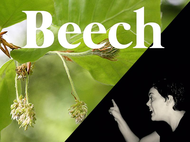 beech flores de bach terapia floral evolutiva luis jimenez