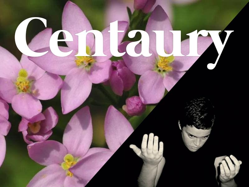 centaury flores de bach terapia floral evolutiva luis jimenez