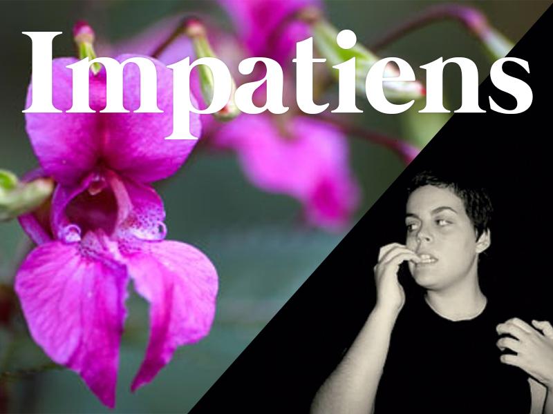 impatiens flores de bach terapia floral evolutiva luis jimenez