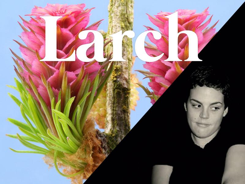 larch flores de bach terapia floral evolutiva luis jimenez
