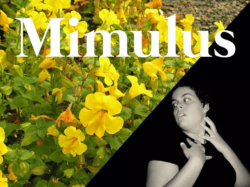mimulus flores de bach terapia floral evolutiva luis jimenez