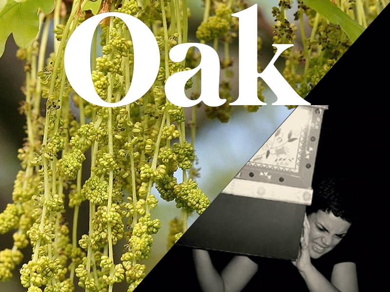 oak flores de bach terapia floral evolutiva luis jimenez