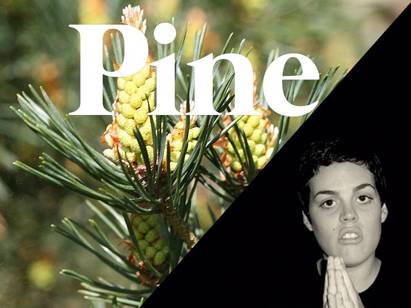 pine flores de bach terapia floral evolutiva luis jimenez