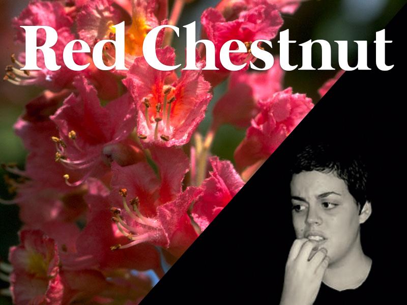 red chestnut flores de bach terapia floral evolutiva luis jimenez
