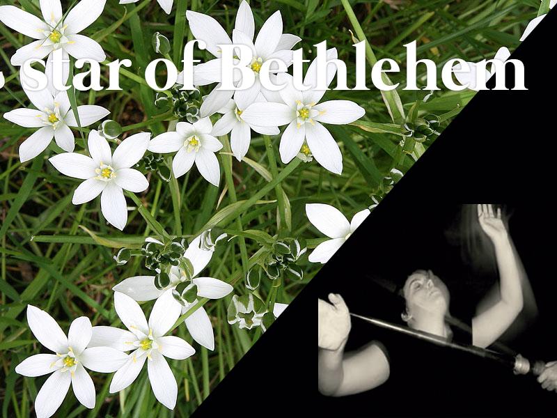 star of bethlehem flores de bach terapia floral evolutiva luis jimenez