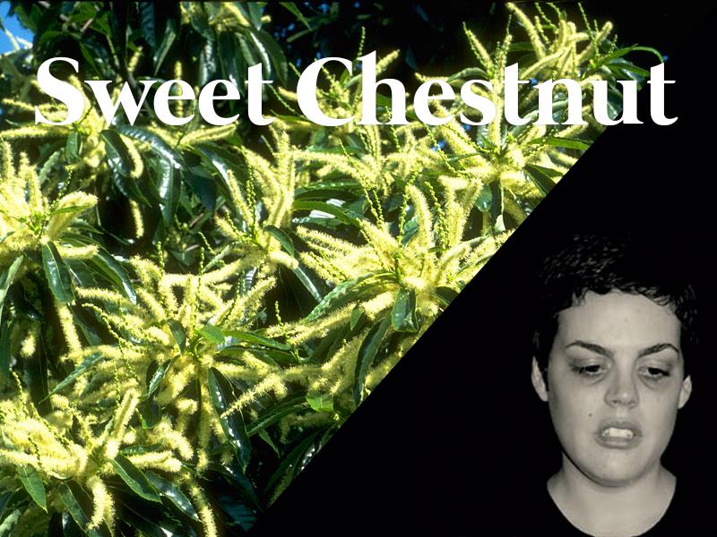 sweetchestnut flores de bach terapia floral evolutiva luis jimenez