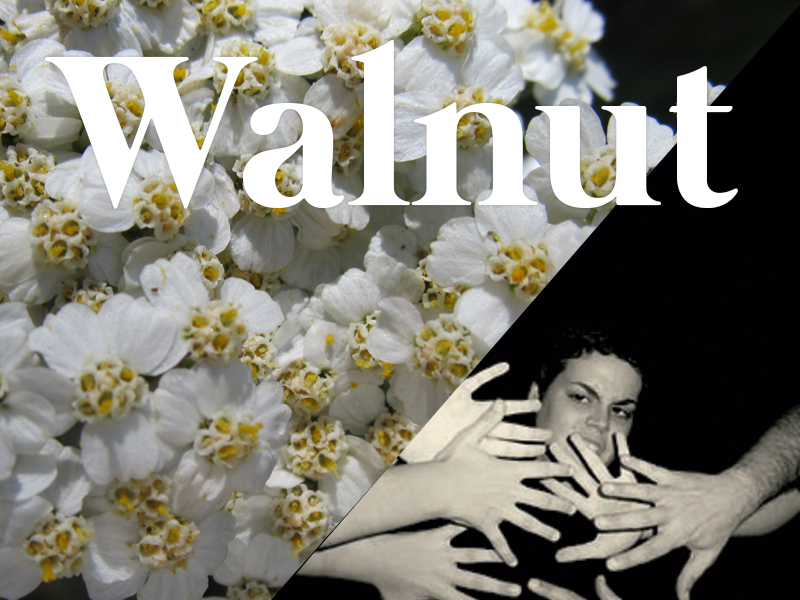 walnut flores de bach terapia floral evolutiva luis jimenez
