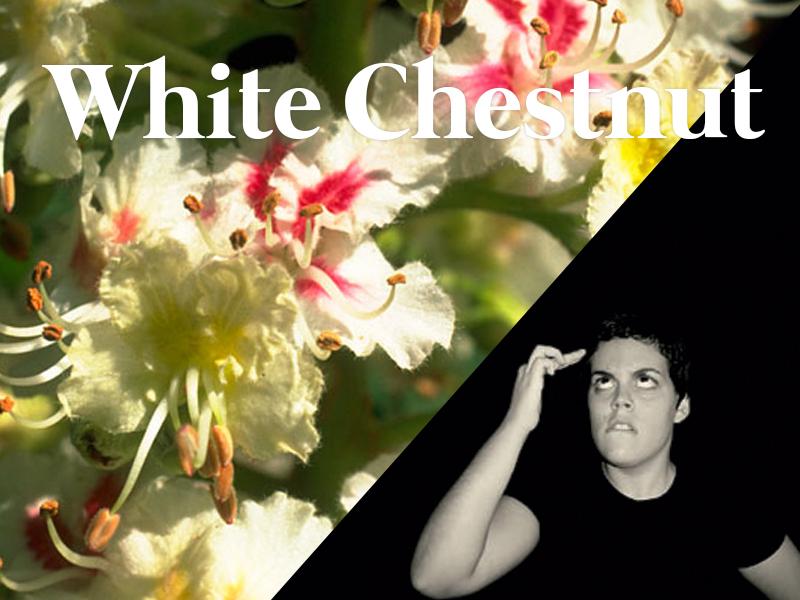 white chestnut flores de bach terapia floral evolutiva luis jimenez