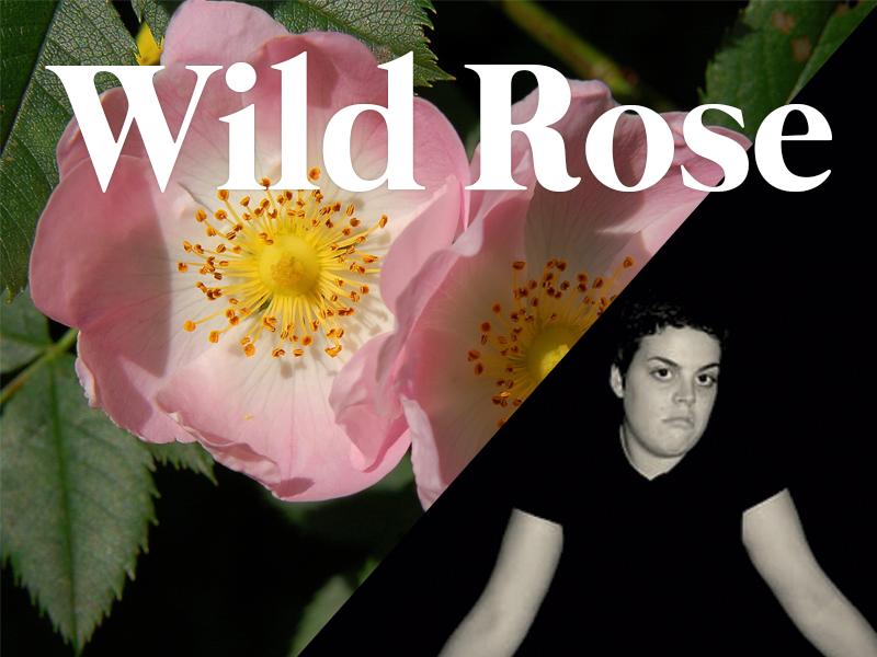 wildrose flores de bach terapia floral evolutiva luis jimenez