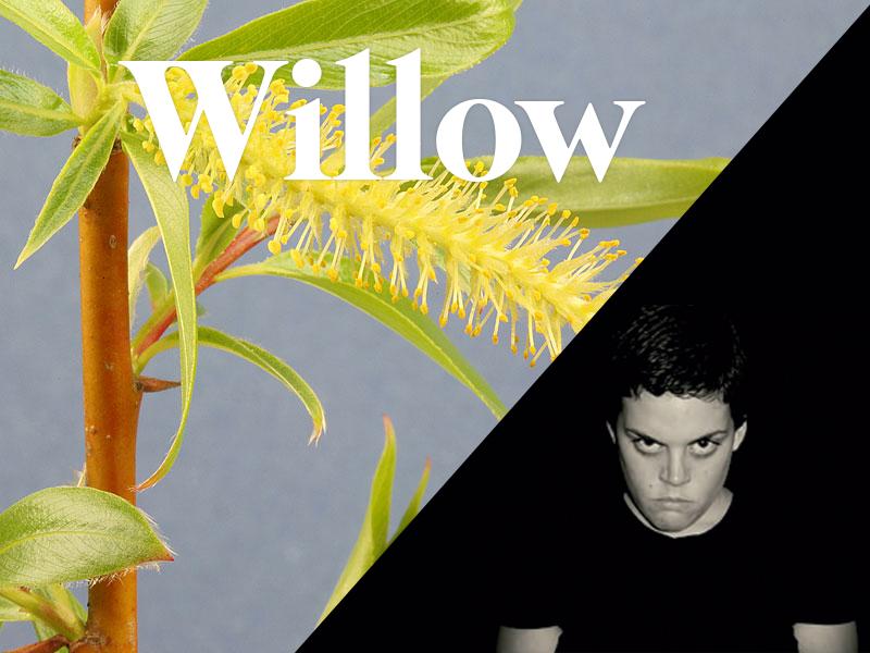 willow flores de bach terapia floral evolutiva luis jimenez