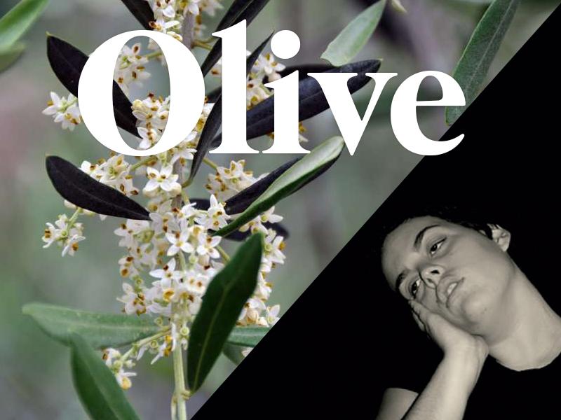 olive flores de bach terapia floral evolutiva luis jimenez